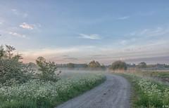 Beautiful Morning (Martine Lambrechts) Tags: beautiful morning landscape mist foggy nature flower