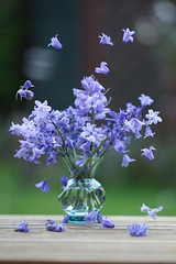 Bluebell Dance (haberlea) Tags: garden dance flowers bluebells plant vase blue mygarden