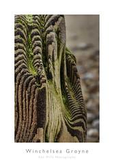 Winchelsea Groyne (Otis335) Tags: winchelsea groyne colour detail wood seaside