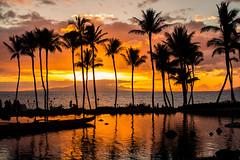 Keep Yourself Warm (Thomas Hawk) Tags: grandwailea hawaii maui wailea waldorfastoria waldorfastoriagrandwailea beach clouds humuhumu humuhumunukunukuapuaa palmtree restaurant sunset tree fav10 fav25