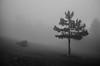 fog (.noctifer) Tags: fog mist mountain greek greece monochrome blackandwhite parnitha attica tree nature europe alone lonely outdoor pine
