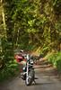(felix.h) Tags: canoneos400d canon eos 400d digitalrebelxti eoskissdigitalx tokina5013528 tokina50135mm28 taunus taunusmountains forest trees nature vanishingpoint motorbike motorcycle bike hondavt750s spring springtime