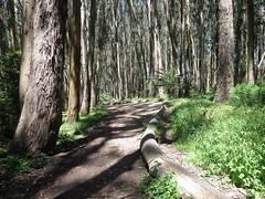 Andy Goldsworthy's Wood Line, The Presidio, San Francisco (2) (leiris202) Tags: presidio andygoldsworthy sanfrancisco