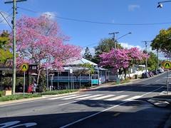 Brisbane, Paddington, pink trumpet trees IMG_20170704_110851 (ianw1951) Tags: brisbane queensland australia paddington trees flora floweringtrees pink