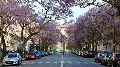 Avenue Carnot 2/2 (Photographer ninja) Tags: paris arcdetriomphe arbres iledefrance printemps