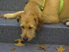 Rest Stop (swong95765) Tags: dog resting animal canine pet lying cute