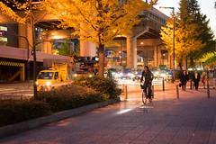 The magic hour of Osaka street view at night (幻星影) Tags: 植物 ginkgo osaka 大阪 夜景 street view 銀杏 bicycle 腳踏車 yellow magic hour