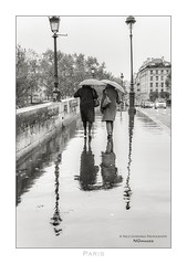 Paris n°153 - Umbrella Day (Nico Geerlings) Tags: ngimages nicogeerlings nicogeerlingsphotography pontmarie rain raining seine rainy reflection reflections paris parijs france leicammonochrom 50mm summilux blackandwhite