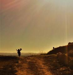 Lonely road 🐾 (carlesbaeza) Tags: adventure advrider adventurerider bigtrail biker dualsportlife dualsport travel moto motobiker motorcycle motorrad yamaha xladv offroad road camino camí