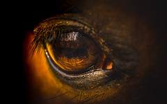 eye-2268-3 (EB_Creation) Tags: macro macromondays eye horse horsephotography closeup brown nikon d7100 dof amateur camera lens creative sigma sigma170700mmf2840 dark