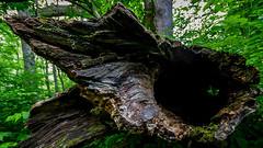 7777 (cleotalk) Tags: jessamine county ky kentucky gorge trail creek overstreet deer woods hiking