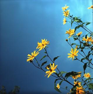 Flower Power #5
