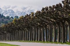Allée, allons (Pierrotg2g) Tags: paysage landscape arbres trees nikon d90 tamron 70200