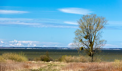 Берег (klgfinn) Tags: balga bay grass landscape shore sky skyline spring tree water бальга берег весна вода горизонт дерево залив небо пейзаж трава
