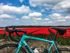 Cycling round May 7 (Klaas / KJGuch.com) Tags: bike bicycle cycling ciclismo bicicletta fiets fietsen wielrennen roadbike outandabout drenthe nederland netherlands nature landscape cloud cyclingphotography iwanttoridemybicycle cyclingaddict bianchi bianchisemprepro italianbicycles spring mayrides clouds cloudart tulip tulips tulp tulpen flower flowers flowerfield tulipfield tulipfields bloemenveld bloemenvelden tulpenveld tulpenvelden