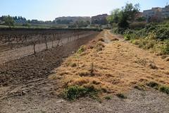 Camps i aigües enverinats, Vilafranca del Penedès (esta_ahi) Tags: vilafrancadelpenedès herbicida veneno muerte rasadelsvinots camídesantpau penedès barcelona spain españa