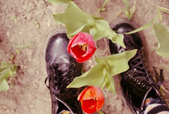 The Tulip Garden (obsequies) Tags: tulip tulips garden gardening greenthumb bulb flowers flower manitoba canada spring grow growing pretty lovely magic nature colorful colourful grunge pastel goth boho love bokeh boots granny grandma cottage chic delicate petals pink orange yellow bokehlicious sweet country life shabbychic may 2017 flowerbed earth earthy natural green