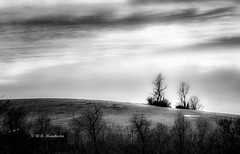 The Trees On The Hill (Roy Manchester) Tags: chatham newyork unitedstates us canon canonllenses clouds availablelight blackwhite 5dsr 7020028lisii ef70200f28isiiusm llenses landscape light trees gps geotag grass