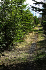 Chose the Road Less Travelled (KaraGautreau) Tags: nature path walking trail trees grass green spring hiking outside outdoors