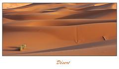 Désert - (diaph76) Tags: afrique africa maroc marocco extérieur paysage landscape sable sand dunes sécheresse drought