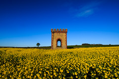 Folly and Oil Seed Rape (Craig Hannah) Tags: folly oilseedrape westyorkshire yorkshire abandoned derelict disused decay agriculture yellow arable craighannah spring april 2017 building watchtower stockmoor farnleytyas england uk