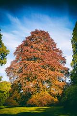 Westonbirt Tree (robbo1001) Tags: places westonbirt nature trees