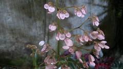 Giardini La Mortella, Ischia, Italy (Sforgat) Tags: plants piante mortella ischia giardini flower flowers