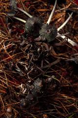 MushroomAtStarlight-6 (UBAcreative) Tags: mushrooms photography fineart