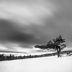 (Mat-S) Tags: lone tree pilat rhonealpes mountain montagne loire neige snow longexposure expositionlongue nuages clouds blackandwhite noiretblanc