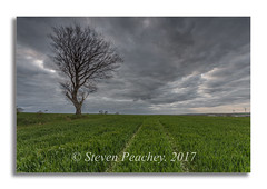 Treescape (Steven Peachey) Tags: landscape sky clouds tree field farmland canon canon6d ef1740mmf4l leefilters stevenpeachey lightroom moodysky countydurham manfrotto lonetree