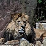 Zoo Heidelberg thumbnail