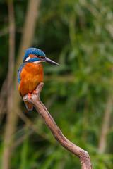 Orange @ Kingfisher
