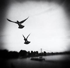 its raining -  what else (Elke Kulhawy) Tags: bnw bw blackandwhite art lensbaby kunst elkekulhawy monochrome fineart dream bokeh cologne river birds sky bridge dark