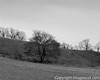winter trees 02 (imagescotdotcom) Tags: winter trees blackandwhite farmland farm field woodland landscape countryside nature february lothians midlothian central belt scottish scotland