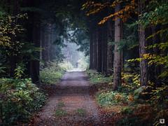 (lotl.axo) Tags: vscofilm xf18135mm sächsischeschweiz sachsen landschaft bielatal fuji xt1 reisefotografie deutschland wald natur kodakgold100 bäume elbsandsteingebirge germany forest landscape nature paysage travelphotography trees woods