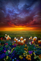 At The End Of Darkness (Phil~Koch) Tags: clouds travel journey life mood emotions country outdoors colors living heaven weather horizons sunrise lines landscape sun light field art meadow sky twilight horizon beam ray sunset wisconsin scenic vertical photography blue yellow office portrait serene morning dawn nature natural earth environment inspired inspirational season beautiful peace hope love joy dramatic unity trending popular canon homedecor rural fineart arts shadow spring tulips garden flowers