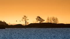 20170411_070419.jpg (jussidimitrijeff) Tags: bird vuosaari gull helsinki sea