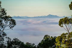 Mt Barney & Flinders Peak from Mt Coot-tha (NettyA) Tags: 2017 australia brisbane mtcoottha mtcootthalookout qld queensland atmospheric buildings clouds fog fogblanket seqld sunrise mtbarney flinderspeak scenicrim sonya7r