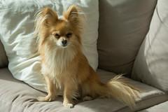 Stella (ekroc101) Tags: mammals canislupusfamiliaris dog bc vancouver coalharbour