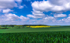 Crop fields (Anthony White) Tags: moorcrichel england unitedkingdom gb dorset green clouds cereal rapeseed barley brassicaceae mustard landscape bluesky