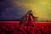 Red Dance (jajasgarden) Tags: tulip red northwest seattle afghanistan kuchi tribal ethnic nikond810