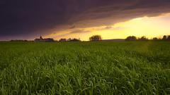 A field nearby (* mariozysk *) Tags: field pole sunset zachódsłońca plants zboże church kościół silhouettes mariozysk pentaxk5 sigma1750