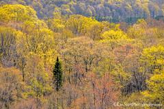 Colors of ... spring! (Ken Scott) Tags: springgreens trees leelanau michigan usa 2017 may spring 45thparallel hdr kenscott kenscottphotography kenscottphotographycom freshwater greatlakes lakemichigan sbdnl sleepingbeardunenationallakeshore voted mostbeautifulplaceinamerica