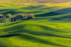 When in Palouse... (ashpmk) Tags: washington washingtonstate eastwashington explore landscape landscapes farm farmlands farmhouse palouse