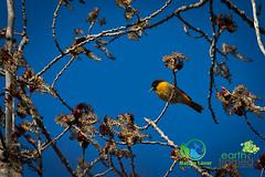 2016-Sarnia-Canatara-Park-Spring-Ontario-6552