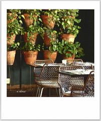 Plantas (o.dirce) Tags: plantas odirce cartãopostal decoração