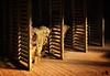 Sheared wool (Lights | Camera | Action Photography) Tags: shed sheep wool shearing windy quirindi warrah heritage qurindi shear newsouthwales nsw australia colony light
