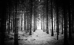The light is crying for you (Rosenthal Photography) Tags: landschaft agfavista200 color oste c41 städte offensen olympustrip35 20170501 bw wald 35mm analog flus dörfer siedlungen landscape nature trees forest path olympus trip agfa vista epson v800