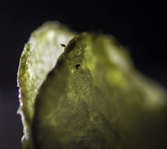 Salt & Vinegar (kamera_krischtl) Tags: macromondays hmm chips crisps potato macro