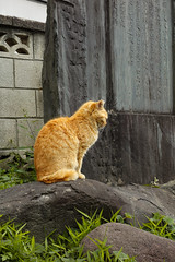 untitled (t-miki) Tags: akabane tokyo cat 赤羽 東京 猫